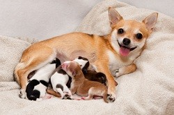 Which mat is best for your pregnant dog